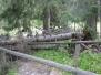 Tabor i Włosienica, 8.VI.2004