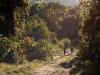 Podejście w lesie równikowym